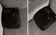 她看到沙發驚現「神秘黑坐墊」嚇壞 近看才揭開「爆笑真相」網傻眼:不符合貓體工學!
