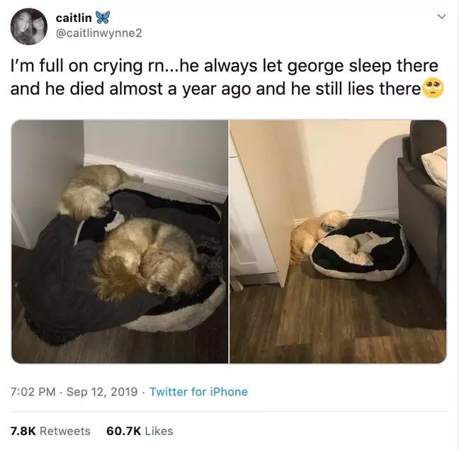 暖心狗1年來「堅持睡地板」主人超納悶 他曝光「不肯睡床墊秘密」網爆淚!