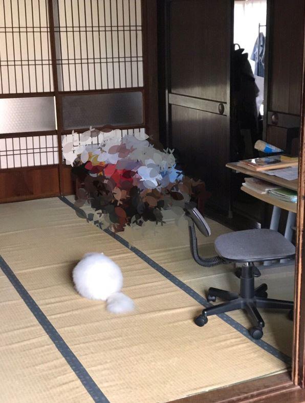 家中驚見「不明白色棉球」畫面被瘋傳 揭開「超萌真相」網傻眼:不意外!
