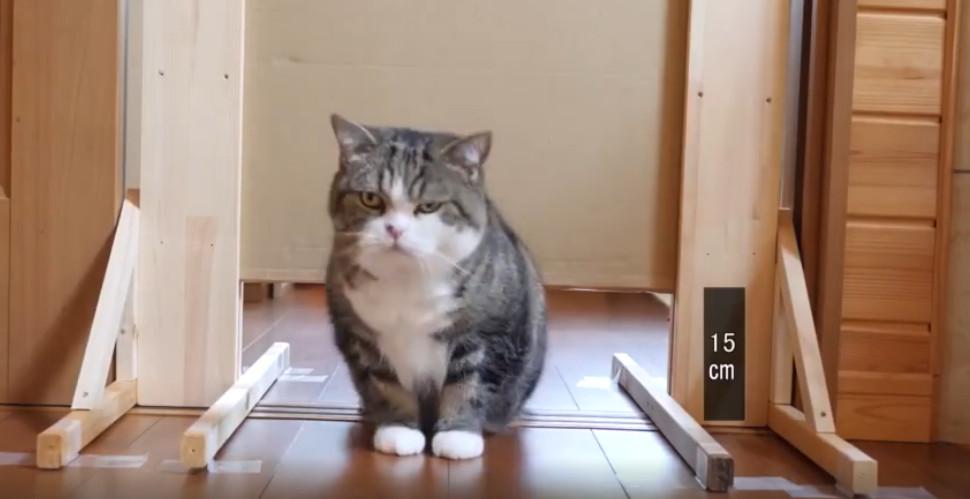 影/貓真的是水做的?網友實測「貓咪可以壓多扁」卡魔王關 神展開結局被推爆!