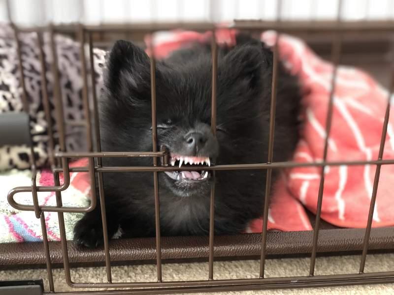 網友分享狗狗把鼻子「卡進護欄縫隙」瞬間 超突兀畫面被瘋傳…下秒「兔子亂入」直接完勝!