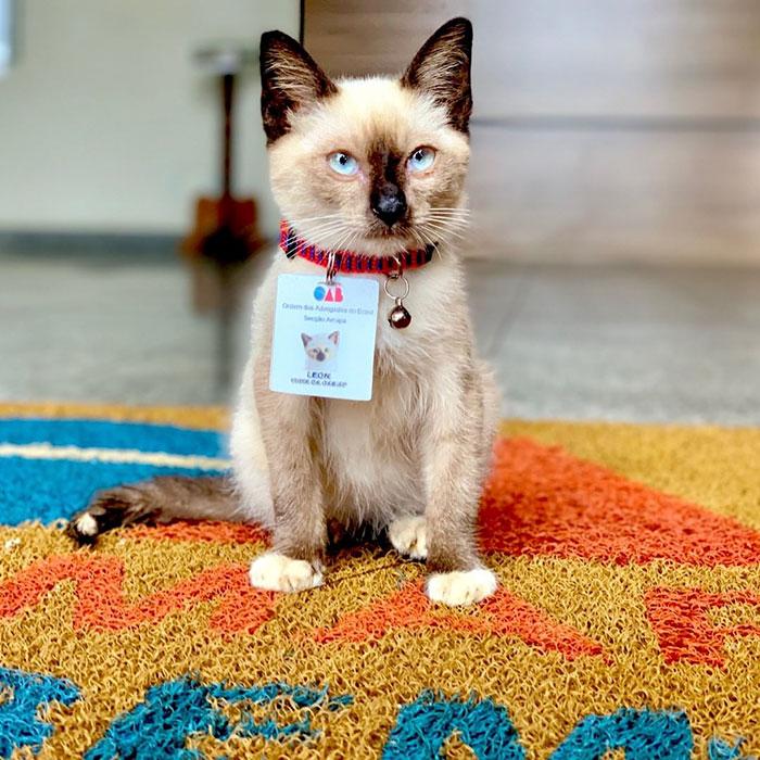 民眾洽公檢舉流浪貓「亂晃很煩」 霸氣事務所「直接錄取牠」還有專屬工作證