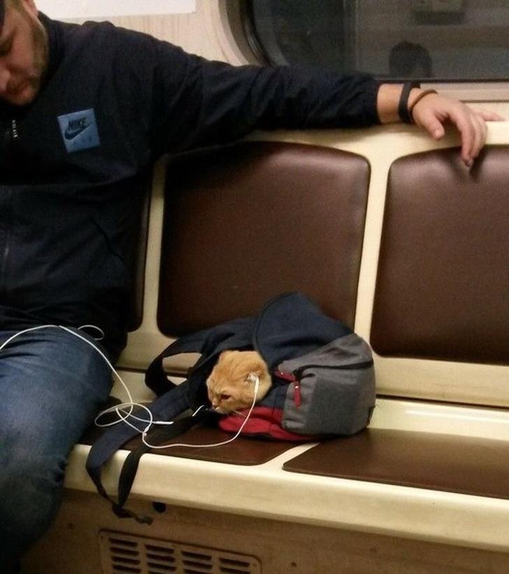 20張證明「你離不開寵物」的暖心照 喵星人「幫爺爺換燈泡」畫面超神奇!