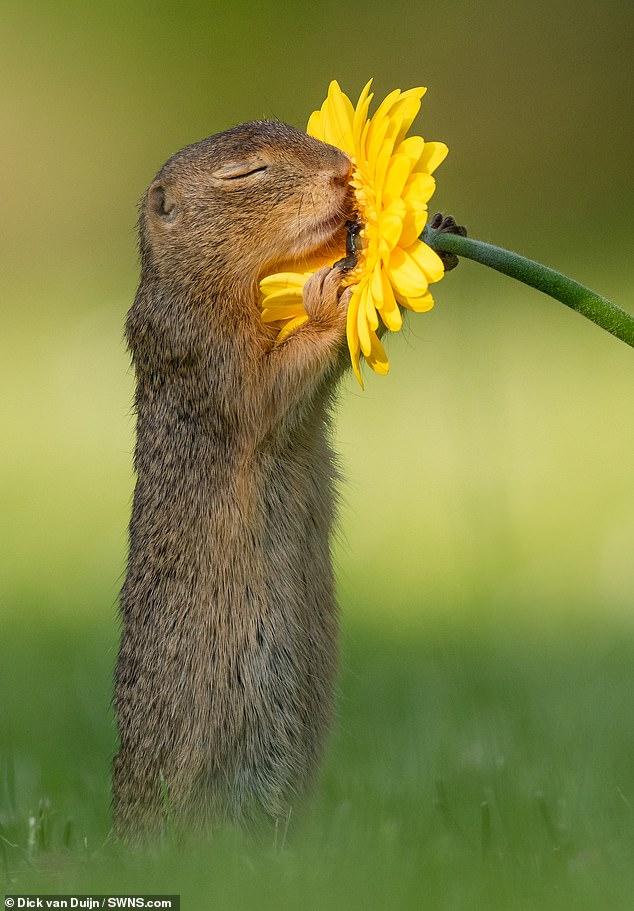 攝影師捕捉「小松鼠聞花香」美照爆紅 牠「睜開眼睛」畫面讓人融化❤