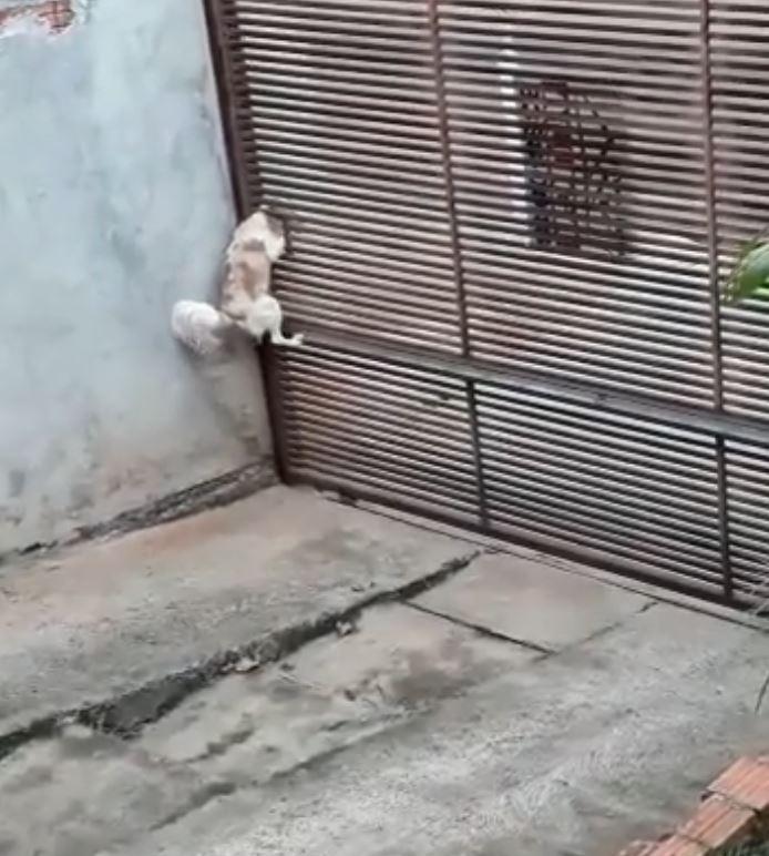 影/聰明狗上演「間諜逃跑記」網瘋傳 牠最後使出「軟骨功絕招」網傻眼:被神俯身了?