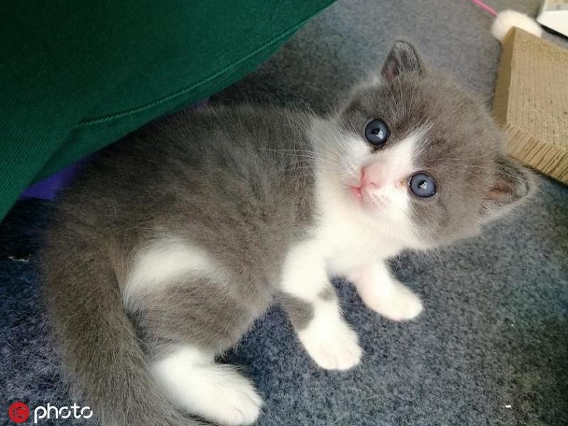 中國商人砸百萬「複製已逝愛貓」 入土後「親手挖出」放冰箱…他:這樣我才不會痛苦!