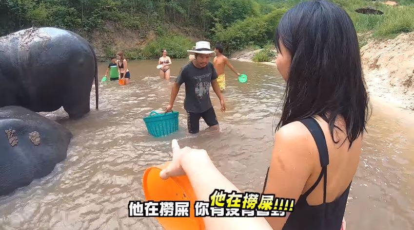 影/泰國不只有騎大象!清邁推「大象志工體驗」幫小象洗澡 網看牠「超享受玩水」模樣被萌翻❤
