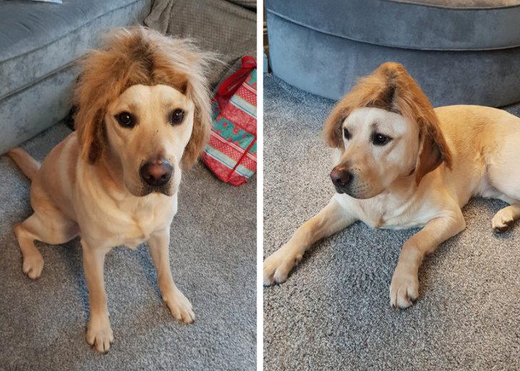 19隻「可以入圍奧斯卡獎」的超愛演寵物 狗狗「被拒絕後開始搞自閉」畫面太傻萌!