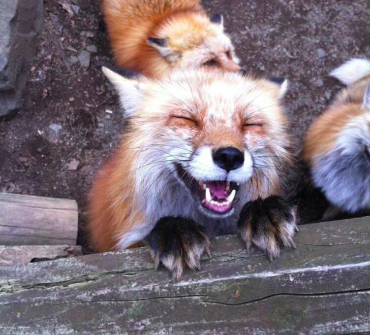 20張證明「動物都是表情帝」的瞬間照片 狗狗被氣到「握拳站起來」畫面超衝擊!