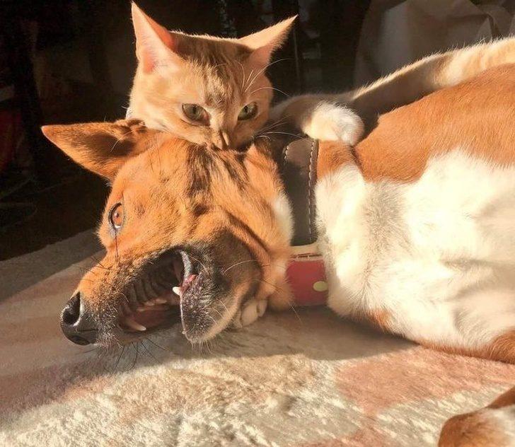 15隻「做壞事被抓包」的調皮毛小孩 貓皇「抱睡金髮正妹」被主人發現…表情超驚恐!