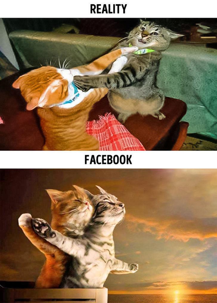 15張「想拍網美照就要付出代價」的爆笑幕後 貓界版「鐵達尼號」太萌啦!