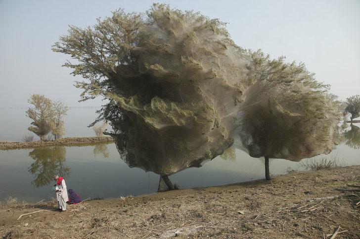 15張證明「大自然絕對惹不起」的驚奇照片 廢棄的百貨公司竟然變「巨大魚池」!