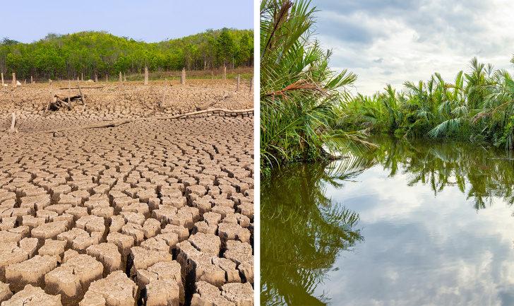11件「如果亞馬遜雨林消失」地球會發生的恐怖事 醫療技術恐「退回原點」!