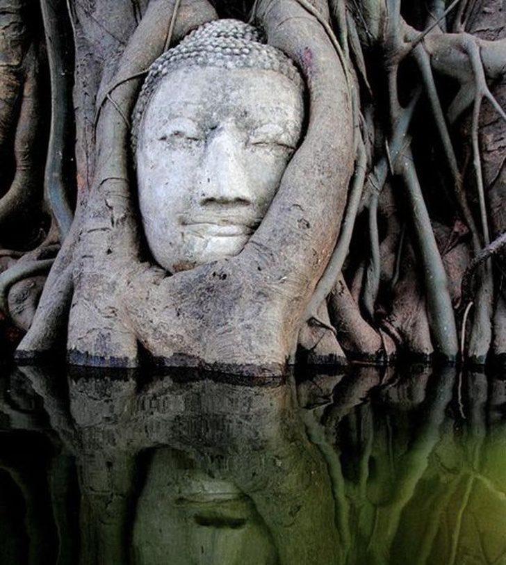 20張證明「人類惹不起大自然」的驚奇照 樹根纏繞著「佛祖的頭」畫面超詭異!
