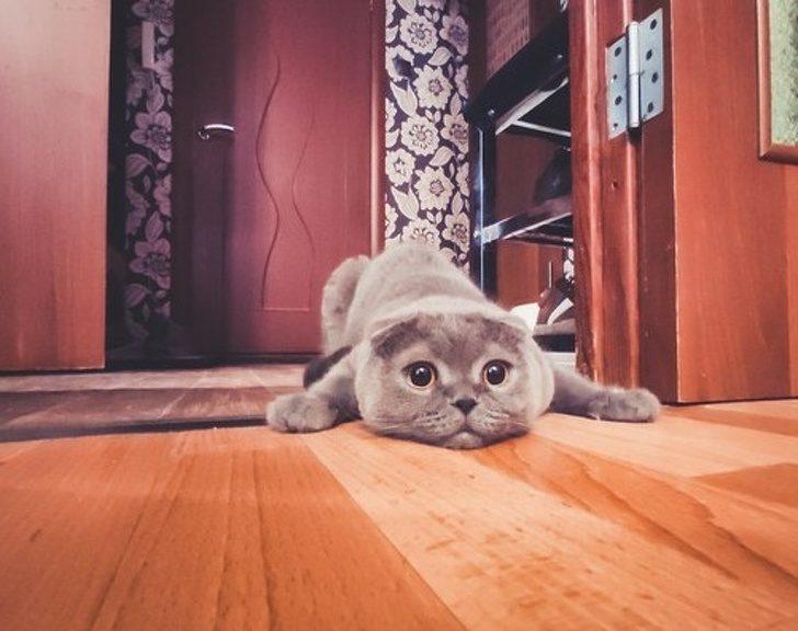 18個只有「資深貓奴才會懂」的超崩潰日常 讓小貓「吃一塊起司」的下場超慘烈!