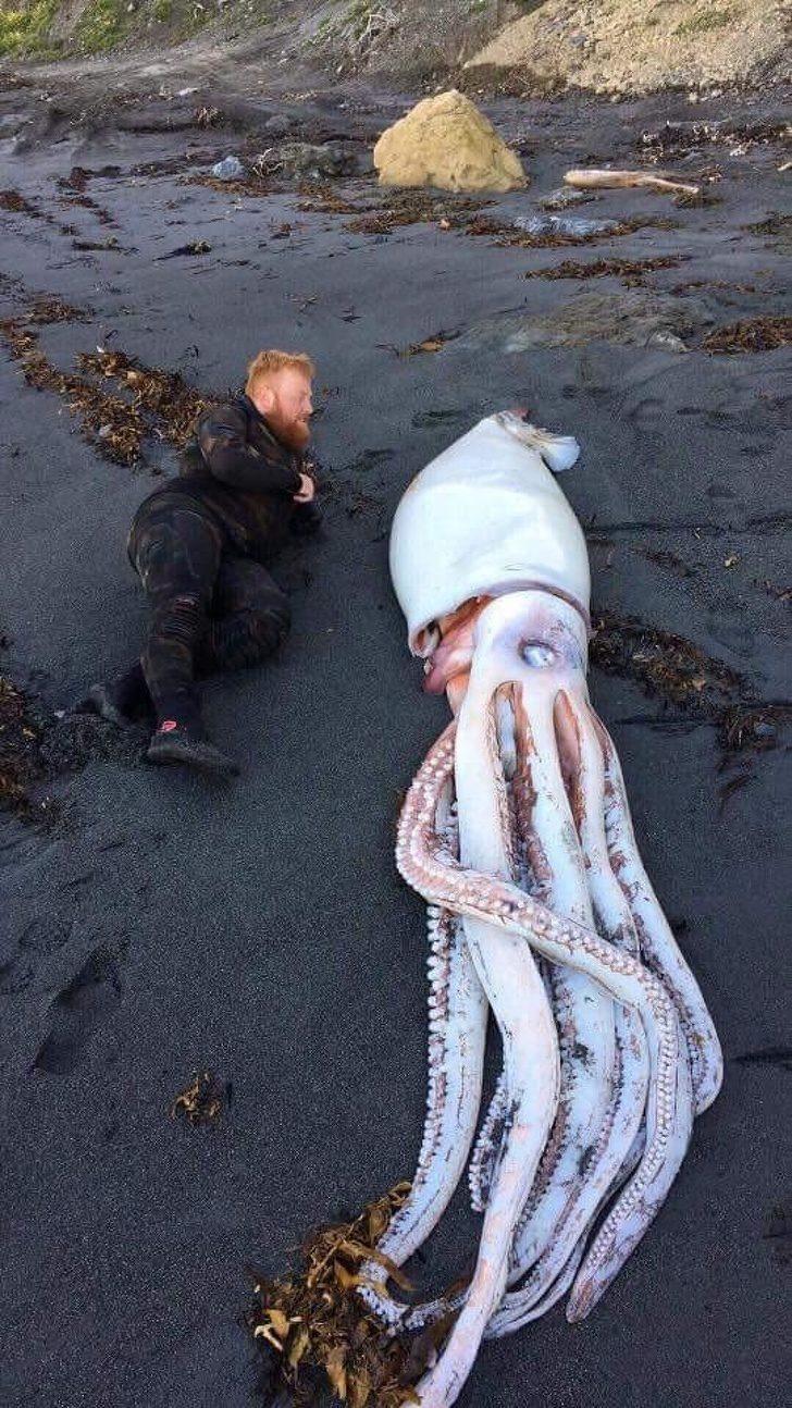 17張「你不願相信這真的存在於地球上」的驚奇畫面 像狗狗一樣大的蟹太可怕!