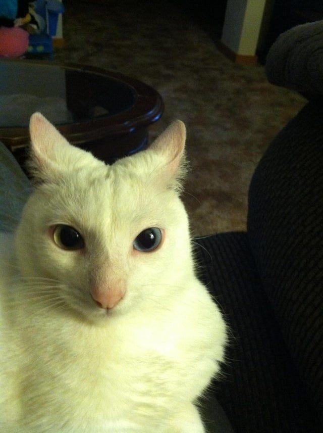 你加入貓奴聯盟了嗎?21張照片證明「喵星人是地球上最棒生物」