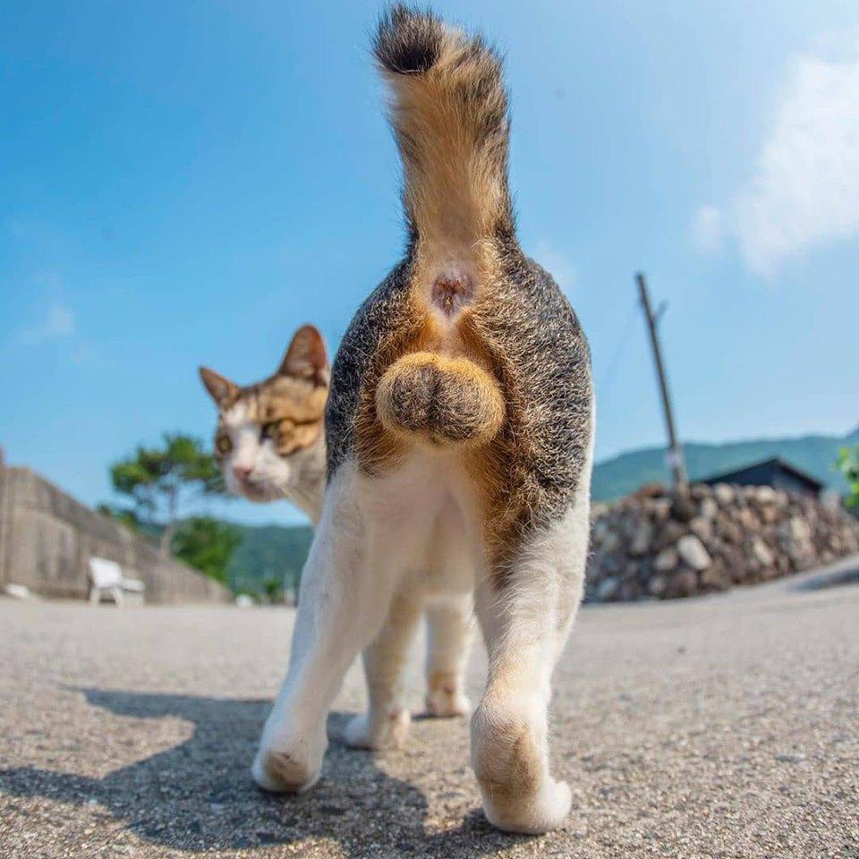 貓奴必收藏!10張超完美的「貓咪屁股蛋」特輯 「鬆軟小圓球」畫面太療癒❤