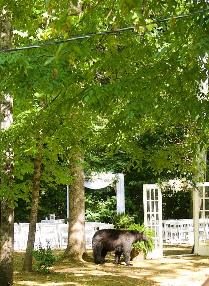 意外拍到「黑熊亂入婚禮」超驚險場面 牠一路「走上紅毯」現場全嚇壞!