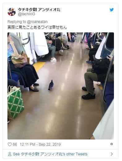 他搭電車遇「懂先下後上」的聰明鴿子 網看到「超有禮貌模樣」嘆:人類要多學習!