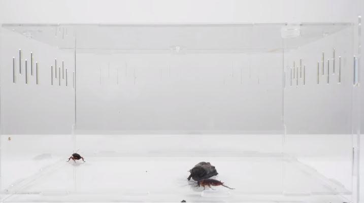 如果把「蝙蝠跟蟑螂關一起」誰會贏?他爆曾看見「蟑螂吃蝙蝠」...影片結局太意外