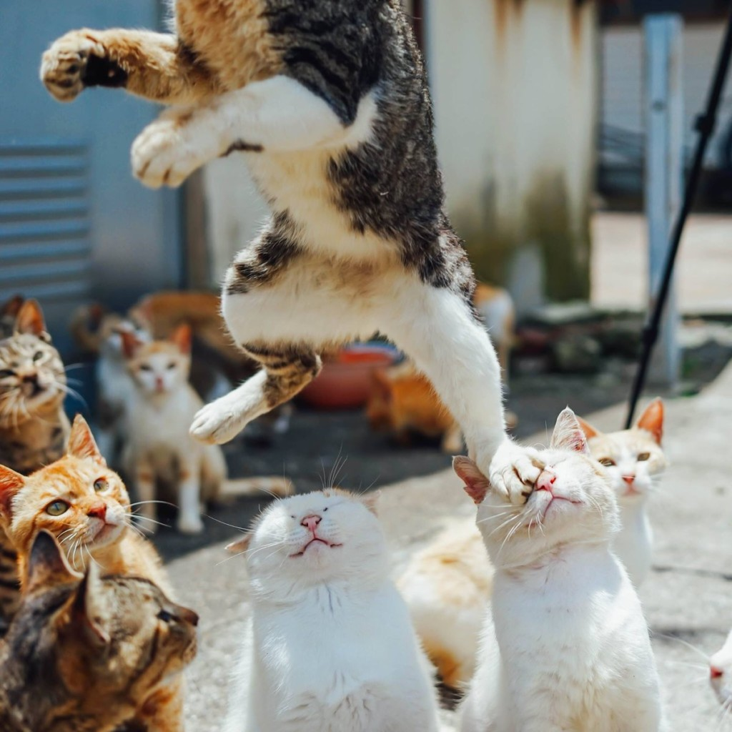 貓老大把同伴當成「跳板」眾人看戲!背後貓咪「謎之表情」網笑翻:超有戲