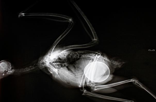 10張超稀有「動物媽媽懷孕X光照」曝光 狗媽媽肚子裡的畫面....密集恐懼注意!