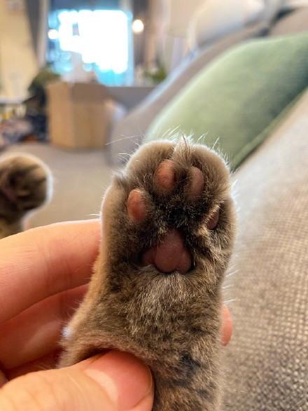 網瘋傳「貓爪裡都藏小熊」超萌照 完美肉球「畫兩筆」瞬間超療癒!