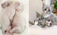 志工撿到流浪貓寳寳 細心照顧後從「髒髒小白鼠→精靈級美貓」網被萌翻:好想領養!