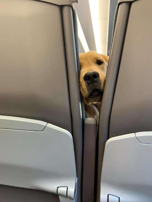 正妹帶狗寶搭飛機「一坐下就想交朋友」 聽到窸窣聲卻秒回頭直接「五官糾結」:偶要吃~
