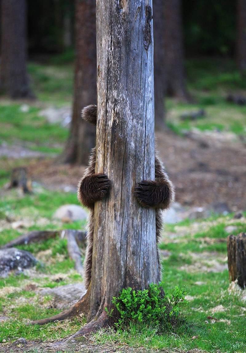 2019《搞笑野生動物攝影獎》決賽作品出爐!棕熊「臭臉抱頭」完美還原星期一的你