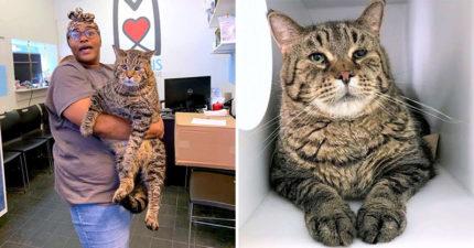 12公斤胖貓沒人要!收容所Po文牠「超哀傷眼神」爆紅 3000封認養信全指名要牠