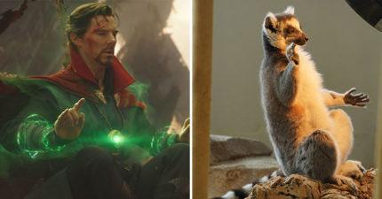 動物版復仇者聯盟!牠神還原「奇異博士冥想」畫面 下秒還「翻白眼」超傻萌