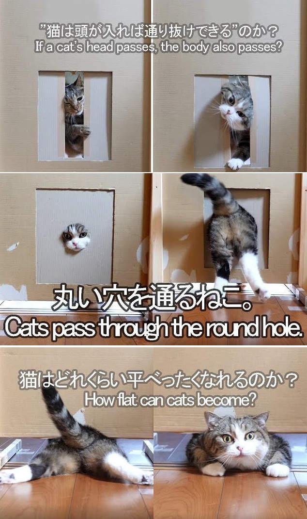 影/頭過身就過?網友實測「貓咪挑戰鑽洞」被瘋傳 牠的「超神軟骨功」結果太驚人!