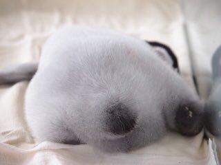 網收集「企鵝屁屁特輯照」被瘋傳 超萌「小腳掌+圓尾巴」全網尖叫:太療癒❤