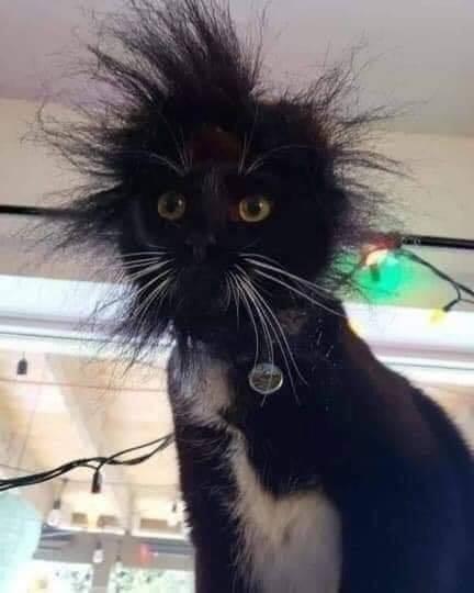 調皮貓「把頭探進電線槽」下秒卻觸電 瞬間「變獅子頭造型」笑翻全網!