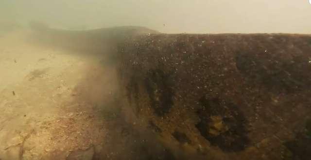 影/潛水員在水底發現「世界最大蟒蛇」 意外和史前生物「四目交接」震撼畫面曝光!