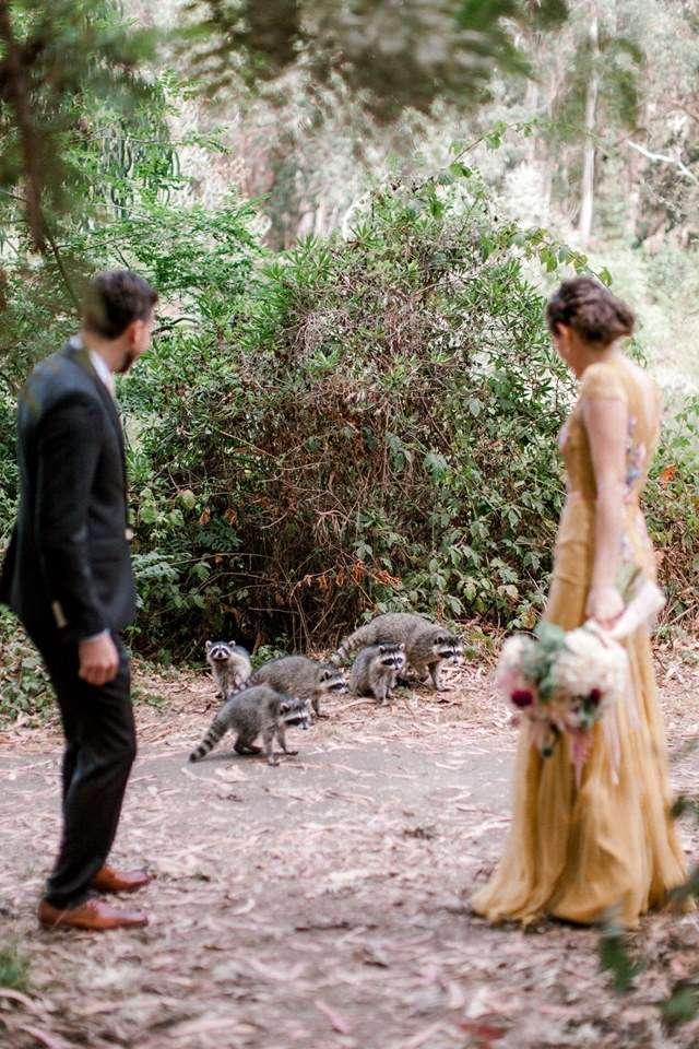 新人拍婚紗照被一群浣熊搶鏡!牠們「100%配合鏡頭」超萌畫面被讚爆:好療癒❤