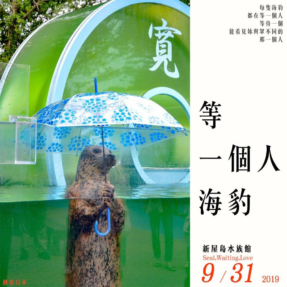 網瘋傳「水族館裡的海豹」竟然會撐傘 超標準姿勢嚇呆10萬人:工讀生出來!