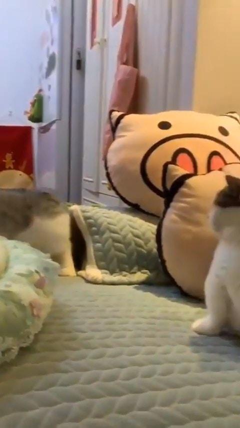任性貓「耍脾氣欺負同伴」畫面被瘋傳 對方無辜被揍後「委屈表情」笑翻全網!