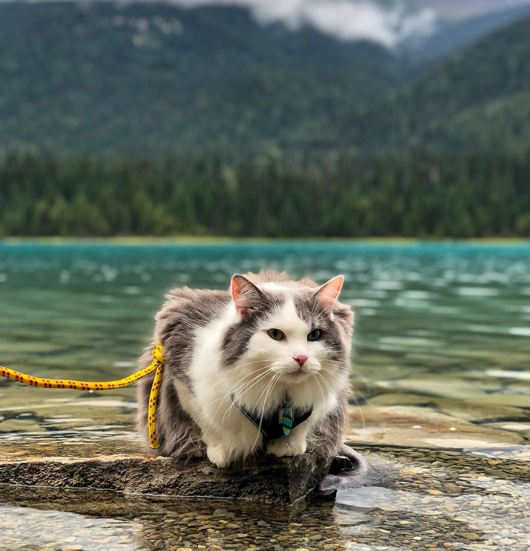 好動貓皇「跟奴才一起爬山」照片爆紅 牠的「超心酸的過去」讓網心疼!