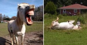 「世界最ㄎㄧㄤ馬」粉絲狂朝聖 「睡到像裝死」路人差點報警!