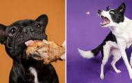 「寵物看見食物」超真實表情 「飛撲肉肉」網笑翻:我家也這樣!