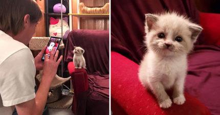 夢幻小乳貓「天生網美命」收服大票貓奴 看到鏡頭秒「靦腆萌笑」比模特兒還專業!