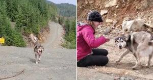 愛犬在森林「失蹤9天」完全沒進展 主人靠「天才招數」秒拐出牠:這是什麼味道!