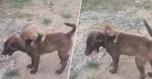 暖狗散步到一半「空降迷路小猴」 牠直接順路「送牠到警局」!