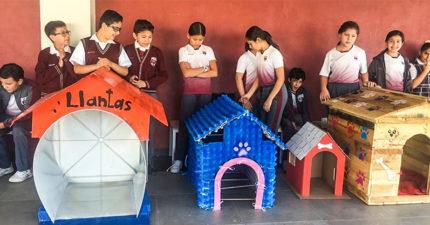 小學生幫「流浪狗打造溫暖小屋」 製造材料「超環保」大人都該學