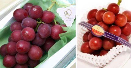 世界上最貴的葡萄!日本專家花14年開發「最完美味道」 一串100萬還超難買