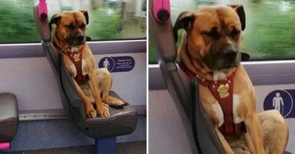 路人驚見一隻狗狗獨自搭公車 攤在座位上「神情超悲傷」...真相讓網心碎