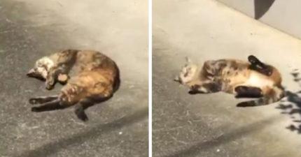影/呆萌貓「超愛曬太陽」興奮藏不住 牠在地上「變打滾邊享受」畫面讓人融化❤